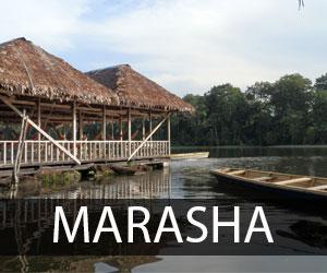 Marasha1